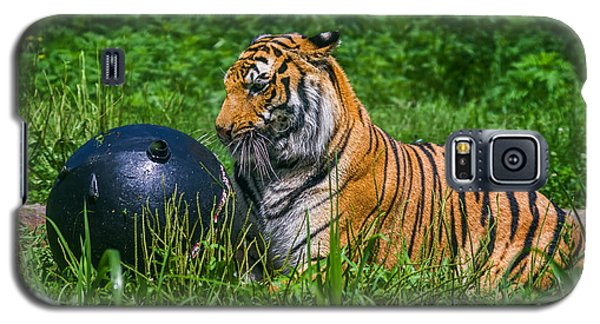 Tiger Playing With Ball Galaxy S5 Case