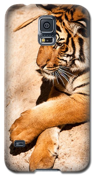 Tiger Resting Galaxy S5 Case