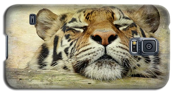 Tiger Snooze Galaxy S5 Case by Athena Mckinzie