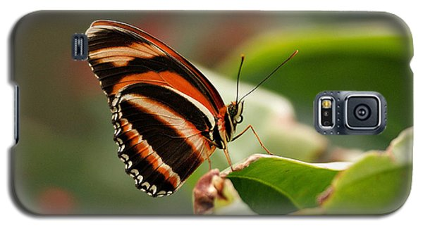 Tiger Striped Butterfly Galaxy S5 Case