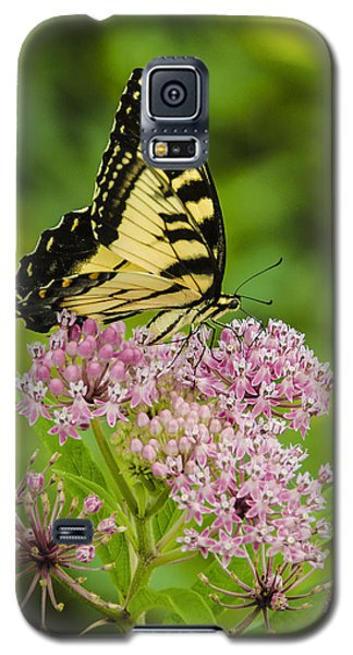 Tiger Swallow Tail Galaxy S5 Case by Bradley Clay