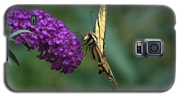 Galaxy S5 Case featuring the photograph Tiger Swallowtail Butterfly by Michael Dohnalek
