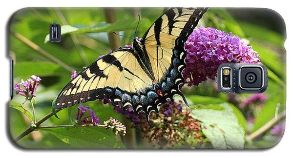 Tiger Swallowtail On Butterfly Bush Galaxy S5 Case