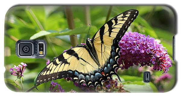 Tiger Swallowtail On Butterfly Bush Galaxy S5 Case