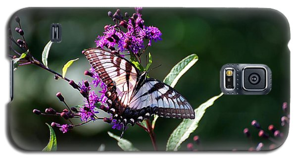Tiger Swallowtail On Purple Galaxy S5 Case