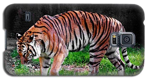 Tiger Tale Galaxy S5 Case