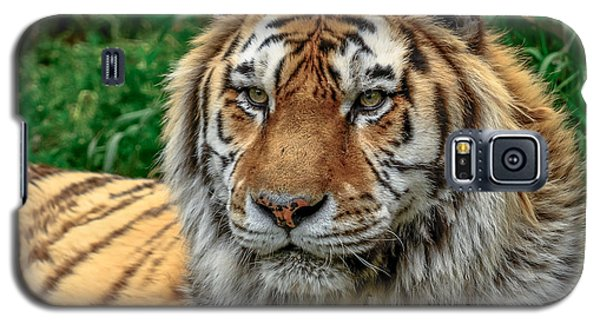 Tiger Tiger Galaxy S5 Case by Yeates Photography