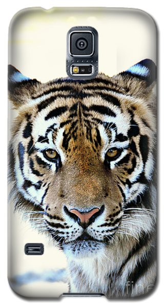 Tigris Galaxy S5 Case by Mindy Bench