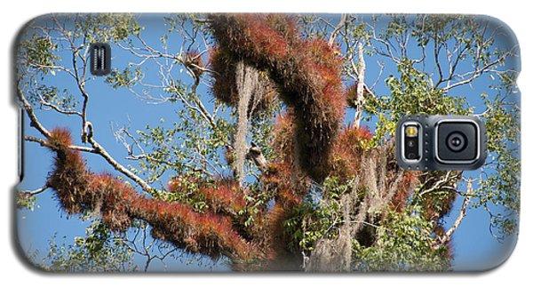 Tikal Furry Tree Closeup Galaxy S5 Case