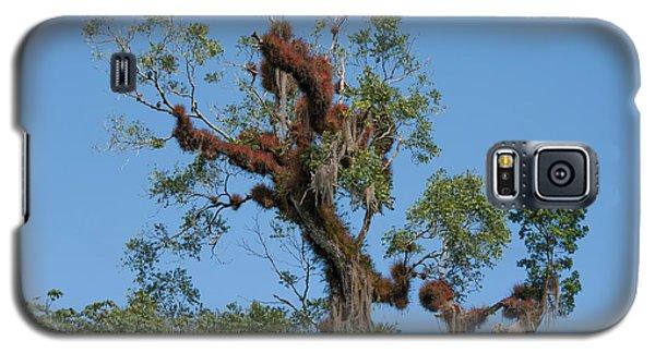 Tikal Furry Tree Galaxy S5 Case
