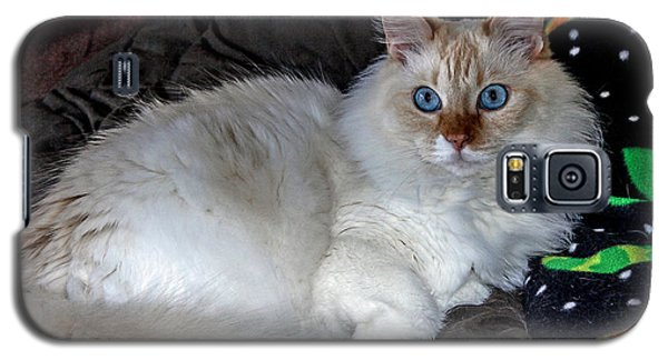 Galaxy S5 Case featuring the photograph Tilly by Elaine Malott