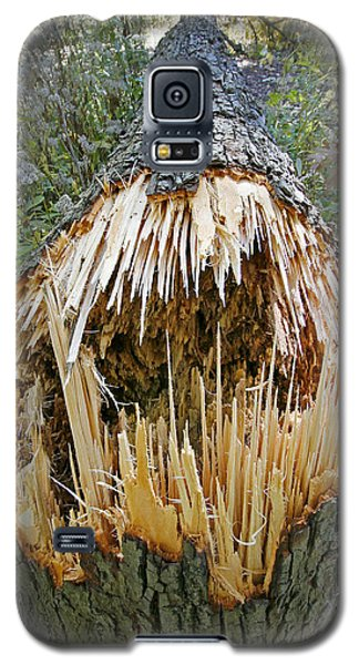 Timber Teeth Galaxy S5 Case