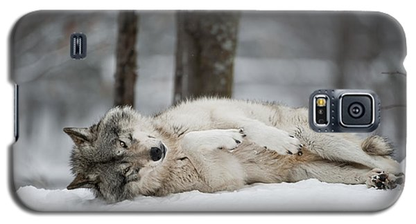 Timber Wolf In Winter Galaxy S5 Case