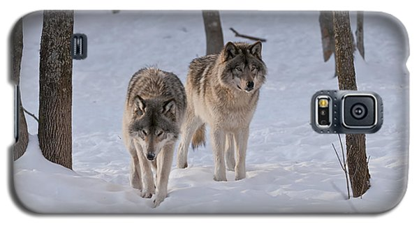 Galaxy S5 Case featuring the photograph Timber Wolf Pair  by Wolves Only