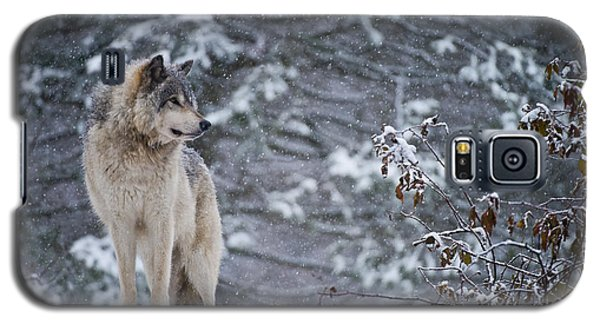 Timber Wolf Pictures 189 Galaxy S5 Case