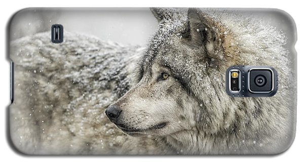 Timber Wolf Pictures 280 Galaxy S5 Case