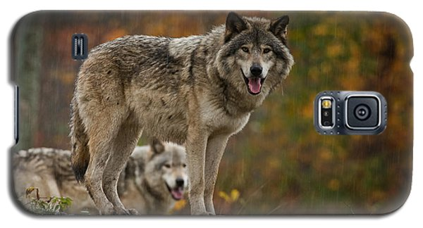 Timber Wolf Pictures 410 Galaxy S5 Case