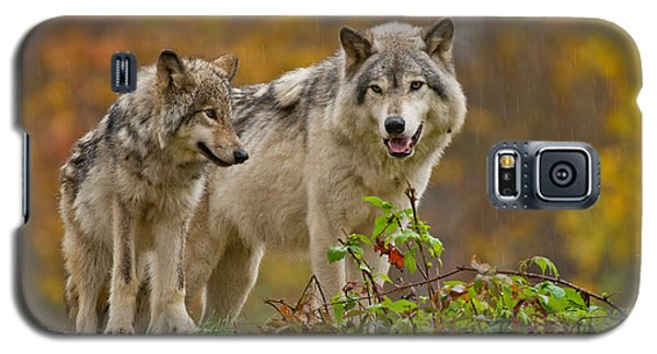 Timber Wolf Pictures 411 Galaxy S5 Case
