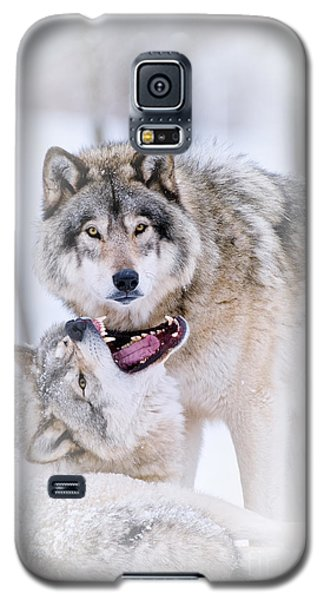 Timber Wolf Pictures 56 Galaxy S5 Case by Wolves Only