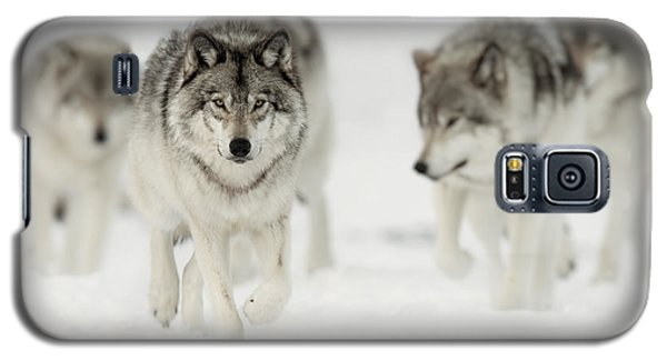 Timber Wolf Pictures 65 Galaxy S5 Case