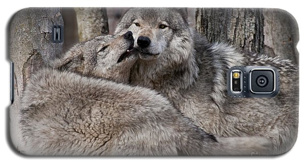 Galaxy S5 Case featuring the photograph Timber Wolves Playing by Wolves Only