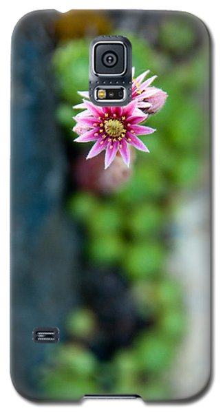 Galaxy S5 Case featuring the photograph Tiny Blossom by Erin Kohlenberg