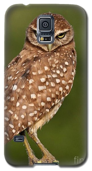 Tiny Burrowing Owl Galaxy S5 Case