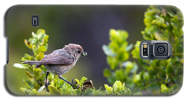 Bushtit Bags A Bug Galaxy S5 Case