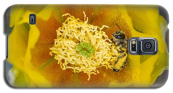 Tiny Dark Bee Covered In Prickly Pear Pollen Galaxy S5 Case