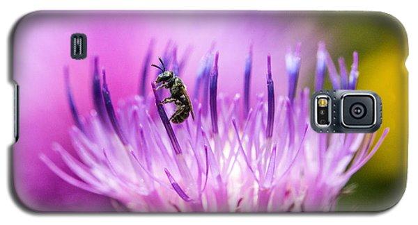 Tiny Dark Bee On Texas Thistle Galaxy S5 Case