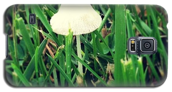 Tiny Mushroom In Grass #mushroom #grass Galaxy S5 Case by Marianna Mills