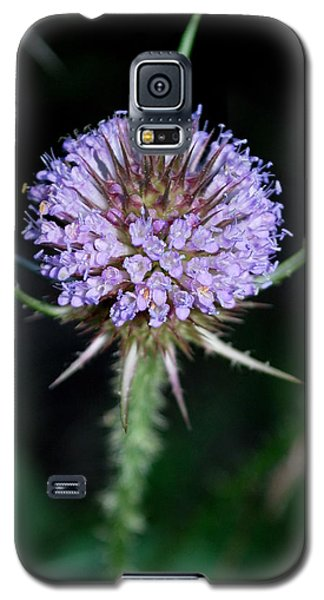Galaxy S5 Case featuring the photograph Tiny Petals by Mary Beth Landis