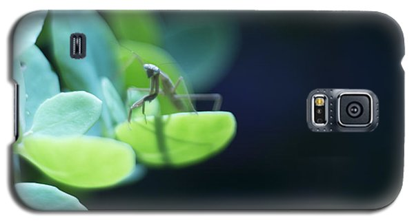 Galaxy S5 Case featuring the photograph Tiny Praying Mantis On Sedum by Rebecca Sherman