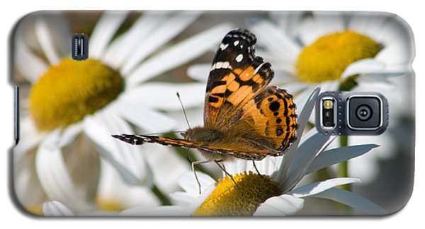 Galaxy S5 Case featuring the photograph Tip-toeing On Daisies by Greg Graham