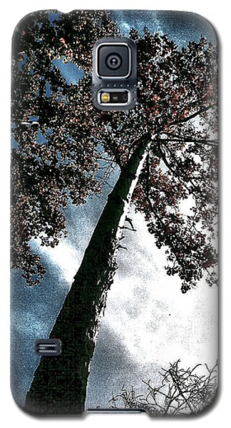 Tippy Top Tree II Art Galaxy S5 Case