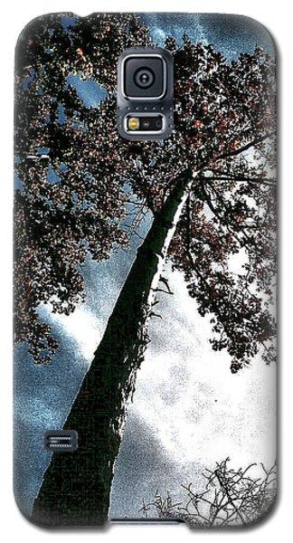 Tippy Top Tree II Art Galaxy S5 Case by Lesa Fine