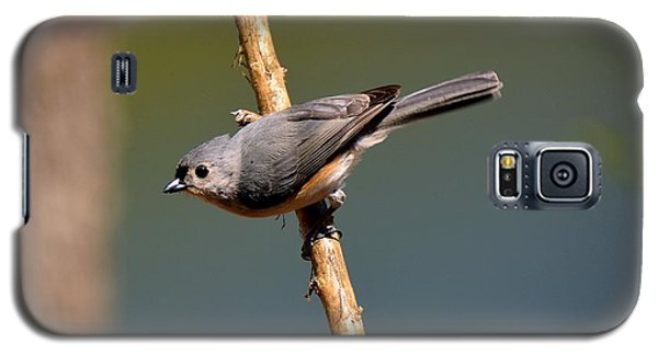Galaxy S5 Case featuring the photograph Titmouse by Lisa L Silva