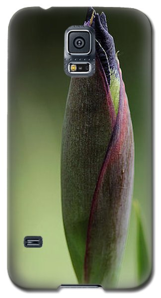 Galaxy S5 Case featuring the photograph Today A Bud - Purple Iris by Debbie Oppermann