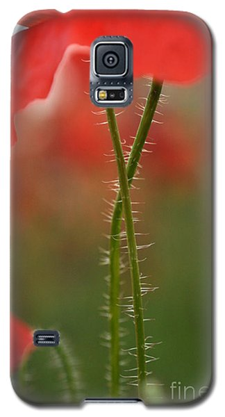 Galaxy S5 Case featuring the photograph Together Forever by Simona Ghidini