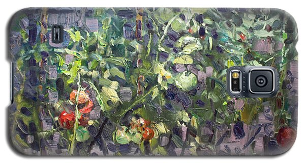 Tomato Galaxy S5 Case - Tomatoes In Viola's Garden  by Ylli Haruni