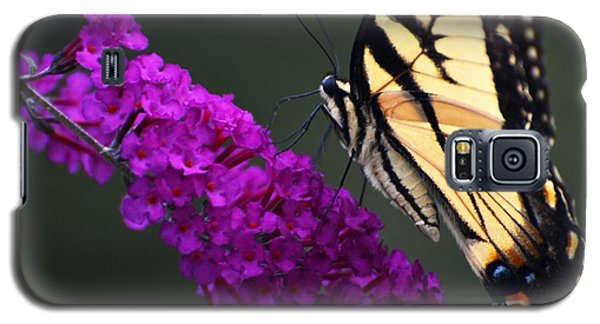 Galaxy S5 Case featuring the photograph Too Close For Comfort by Judy Wolinsky