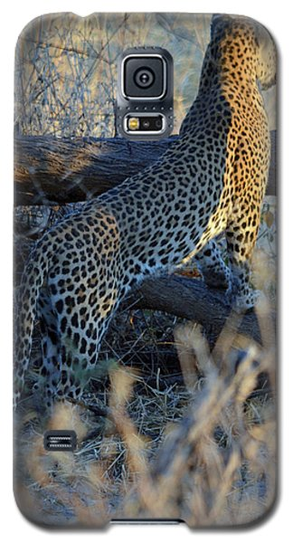 Galaxy S5 Case featuring the photograph Total Attention by Allan McConnell