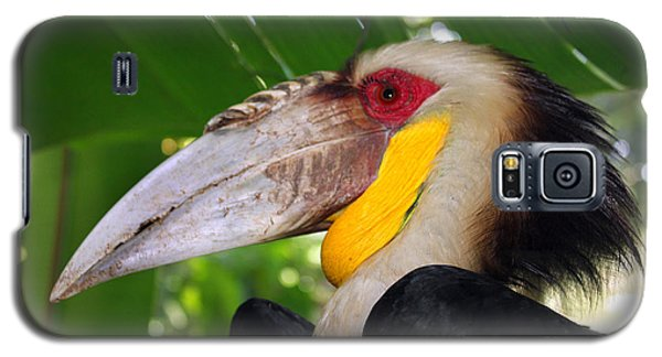 Galaxy S5 Case featuring the photograph Toucan by Sergey Lukashin