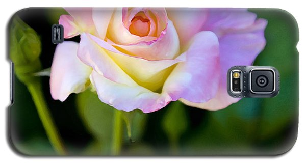 Rose-touch Me Softly Galaxy S5 Case by David Millenheft