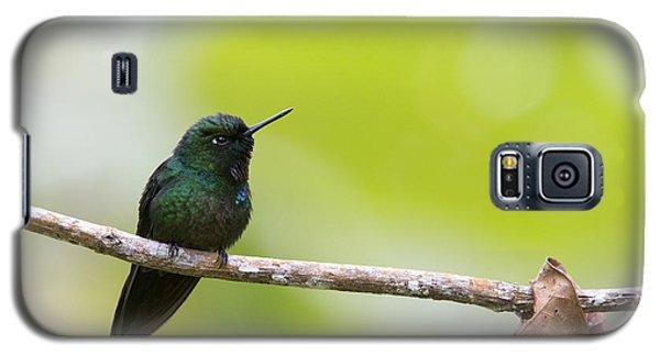 Tourmaline Sunangel Hummingbird Galaxy S5 Case