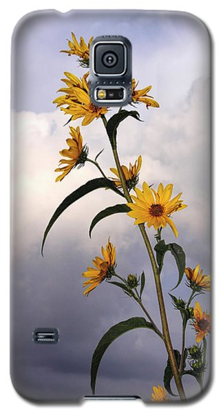 Galaxy S5 Case featuring the photograph Towering Sunflowers by Rob Graham