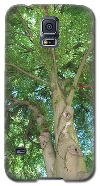 Galaxy S5 Case featuring the photograph Towering Tree by Pema Hou