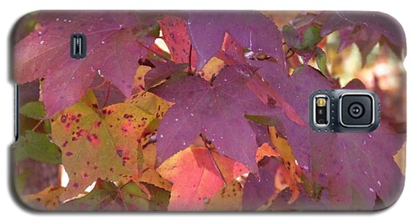 Galaxy S5 Case featuring the photograph Traces Of Fall by Andrea Anderegg
