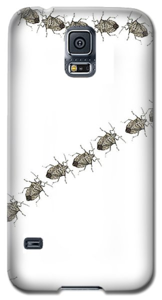 Trail Of Stink Bugs Galaxy S5 Case