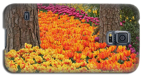 Trail Of Tulips Galaxy S5 Case by Robert Camp